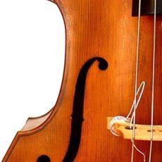 3/4 Lloyd Walnut Bass, September '11 – F-hole